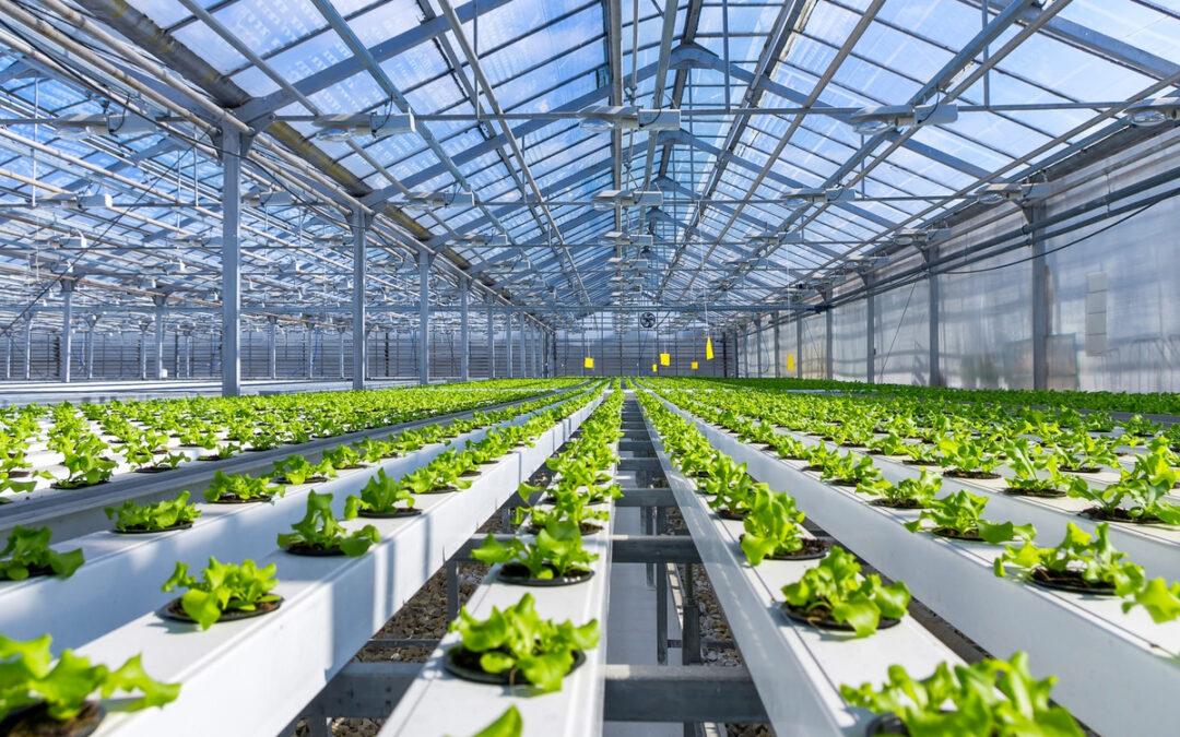"""Agricoltura 4.0: nasce """"Io Coltivo Italia"""""""